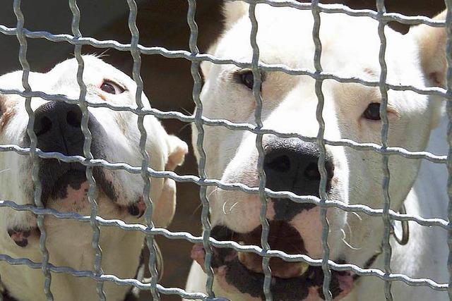 Tierschützer kritisieren Herbolzheimer Hundehalter