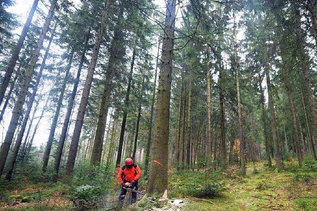 Waldzustandsbericht belegt: Klimawandel schadet Bäumen