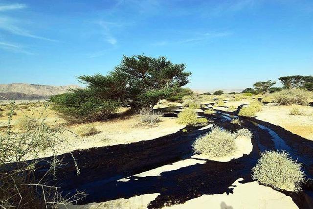 Kaputte Pipeline: Öl verseucht Wüste in Israel