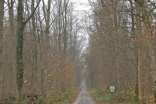 Wald bringt kleines Minus