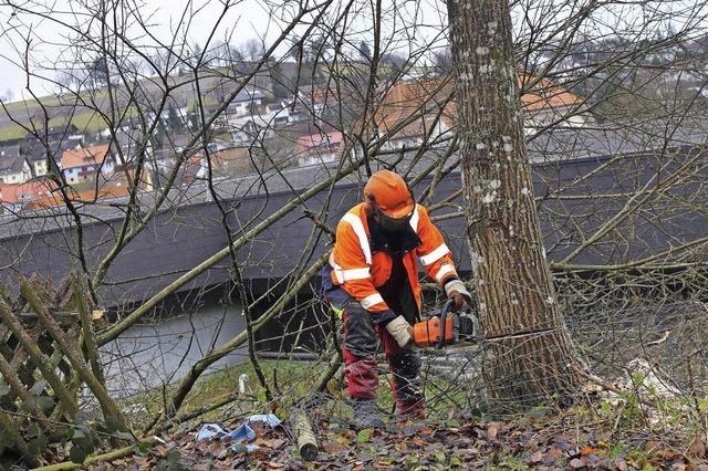 Baumfällaktion: Mühlenstraße bleibt heute gesperrt