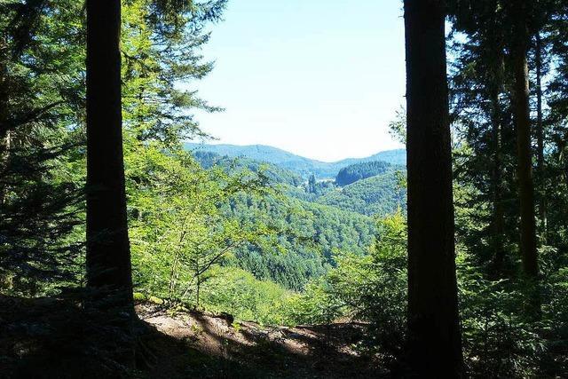 Kein Bestattungswald in Neuried-Ichenheim
