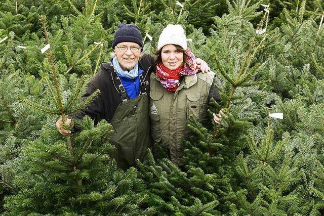 Weihnachtsbaumverkauf läuft – Große Geschäfte rufen Kampfpreise auf