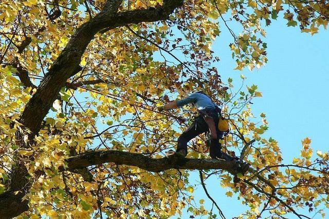 Bäume in der Innenstadt passen nicht jedem