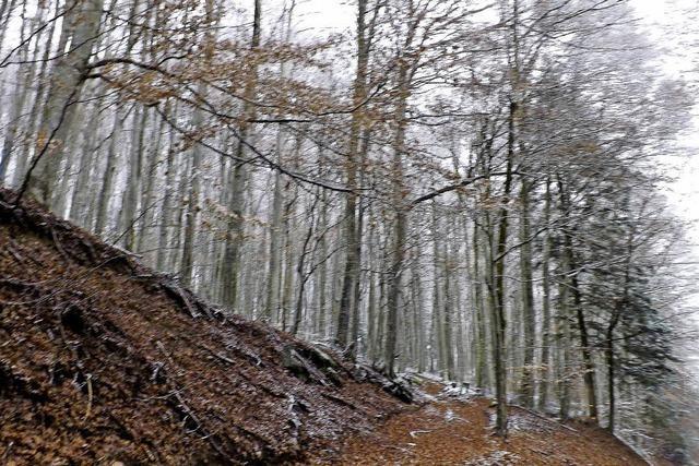 Zweifel am kranken Wald