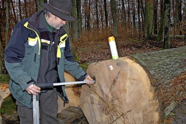 Bei Holzen stehen wertvolle Bäume