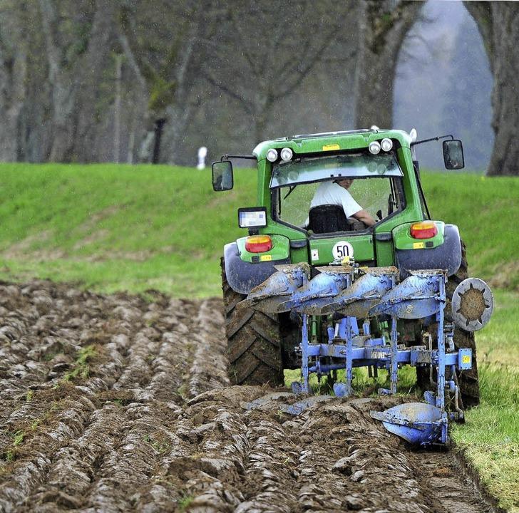 Nicht jedem recht: Grünlandumbruch   | Foto: dpa
