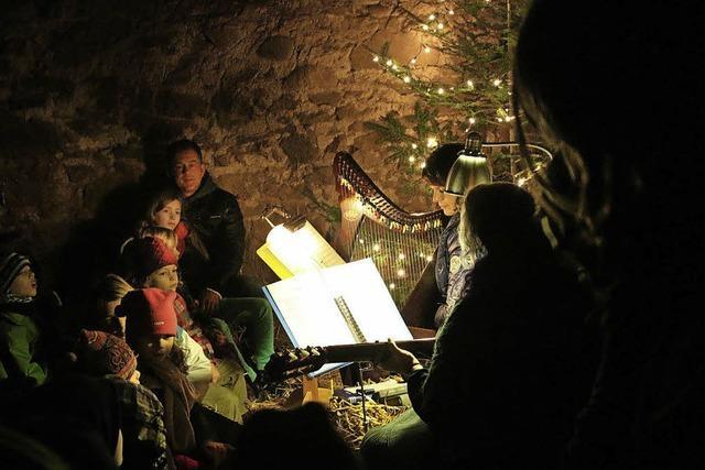 Mit Lamas auf Schmusekurs im Weihnachtsstall