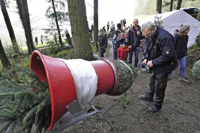 Bei Hugo Bernauer in Kappel kann man seinen Weihnachtsbaum selbst schlagen