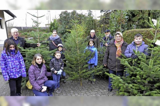 Ein Tannenbaum zur Weihnacht