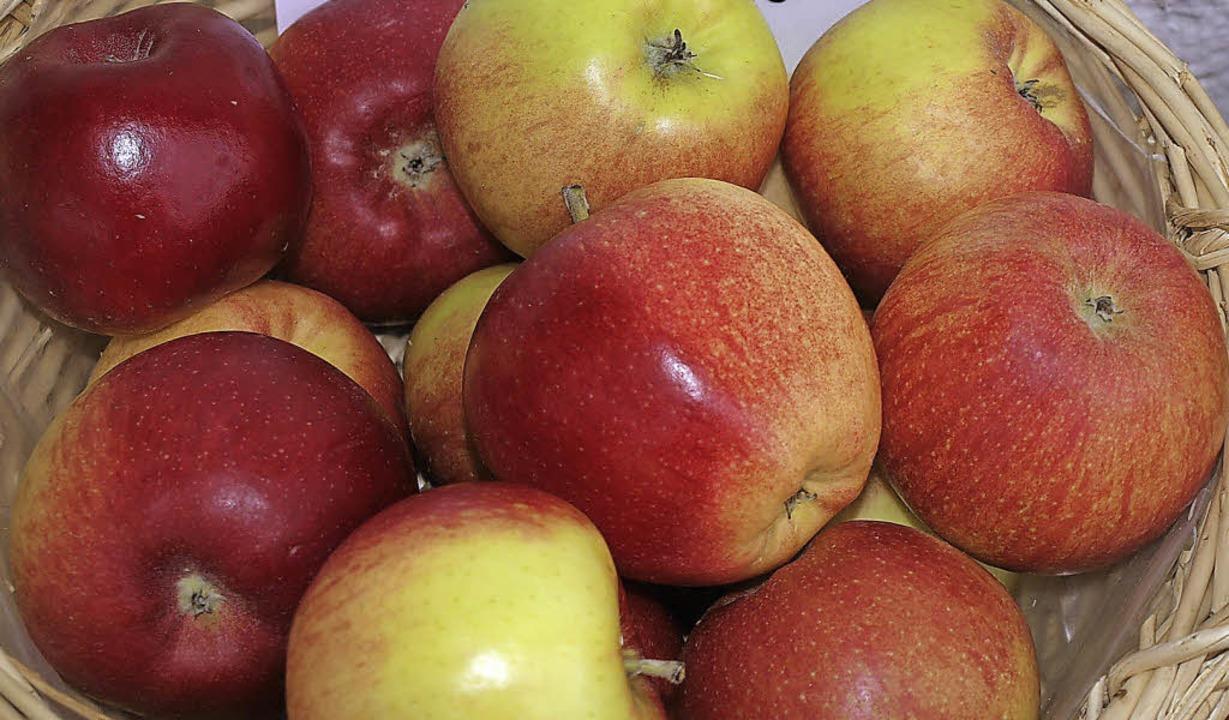 Die Sorte Santana wird vielfach als Allergiker-Apfel beworben und vermarktet.   | Foto: Klaus Nasilowski