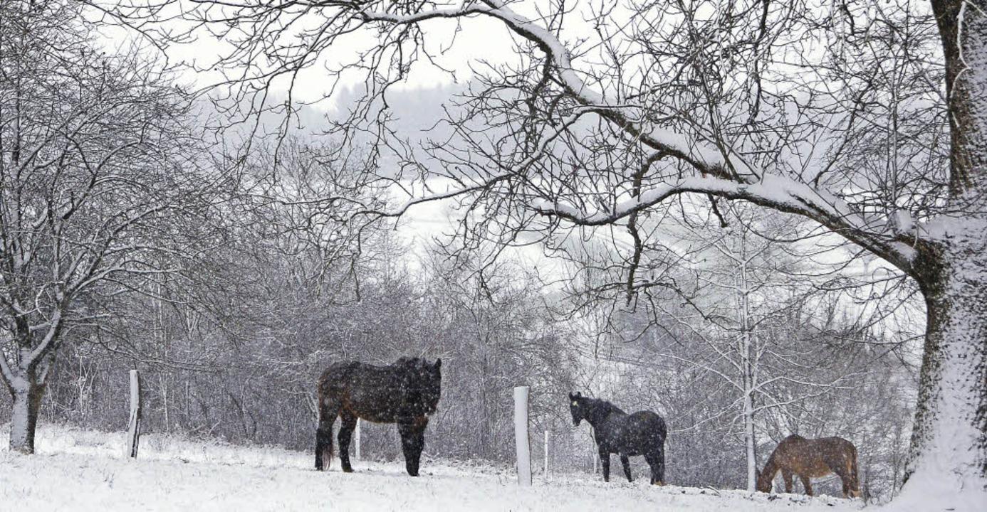 Pferde in einer Schneelandschaft in Obereichsel    Foto: Petra Wunderle