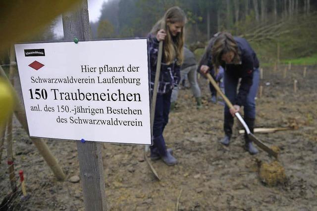 Traubeneichenwald zum Jubiläum