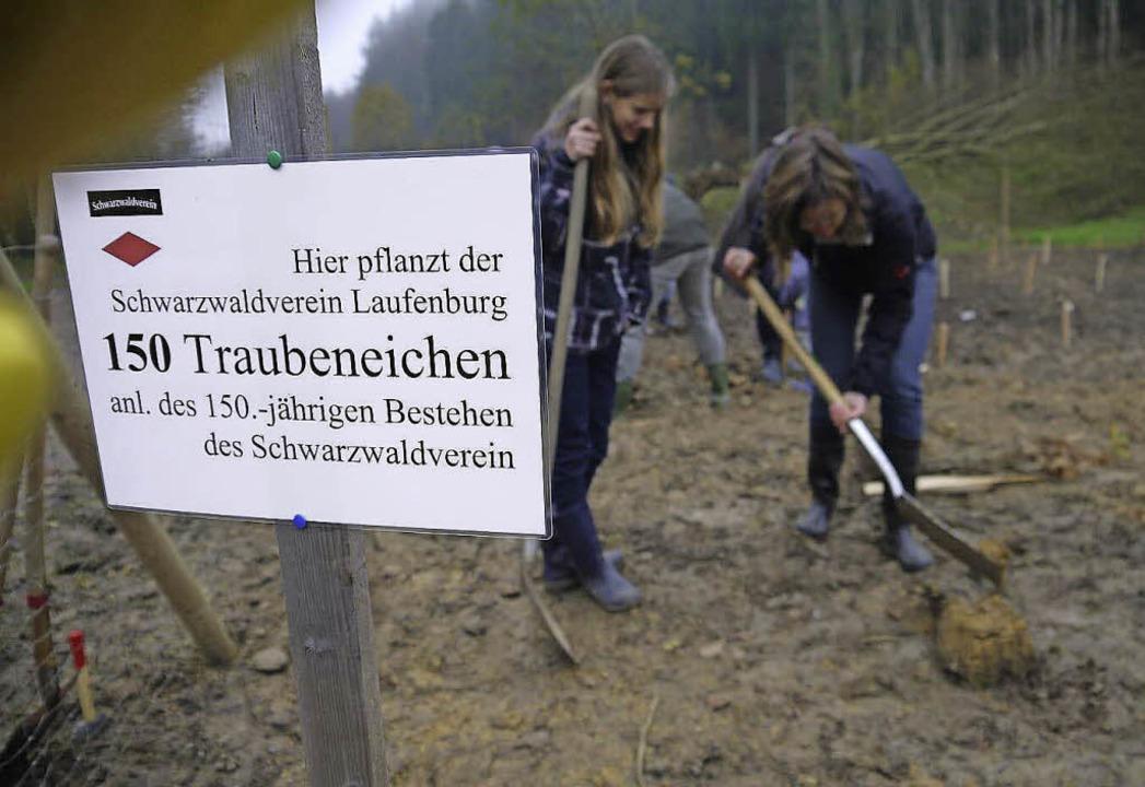 Die Ortsgruppe Laufenburg des Schwarzw...kleines Wäldchen von Traubeneichen an.  | Foto: zvg