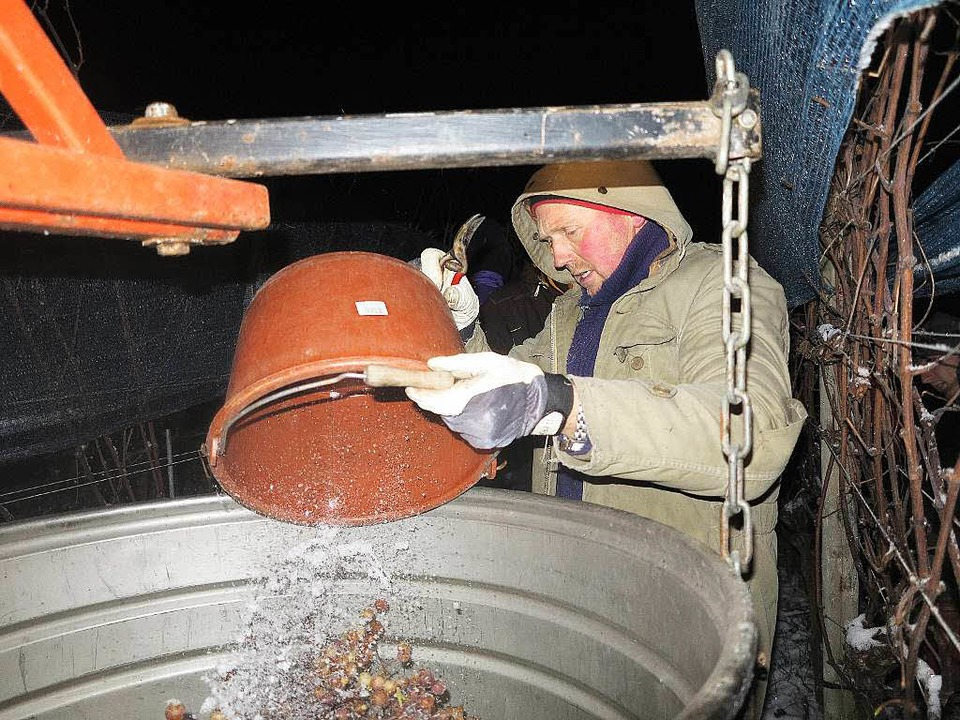 Auch bei der Winzergenossenschaft Schl...m hat man die Eisweinlese eingeläutet.    Foto: Dorothee Philipp