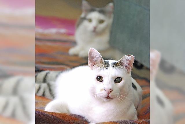Katzen suchen ein Zuhause