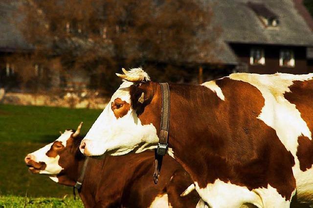 Welche Zukunft die Milcherzeugung im Schwarzwald hat