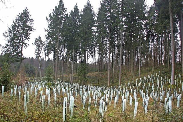 Behörden entgegen der Kritik am Waldumbau