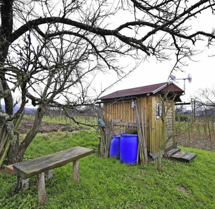 So soll es sein: knorrige alte Bäume, ...st Reben hat, will das Idyll erhalten.  | Foto: Thomas Kunz