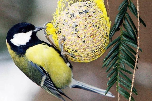 Hilft das winterliche Füttern den Vögeln eigentlich?
