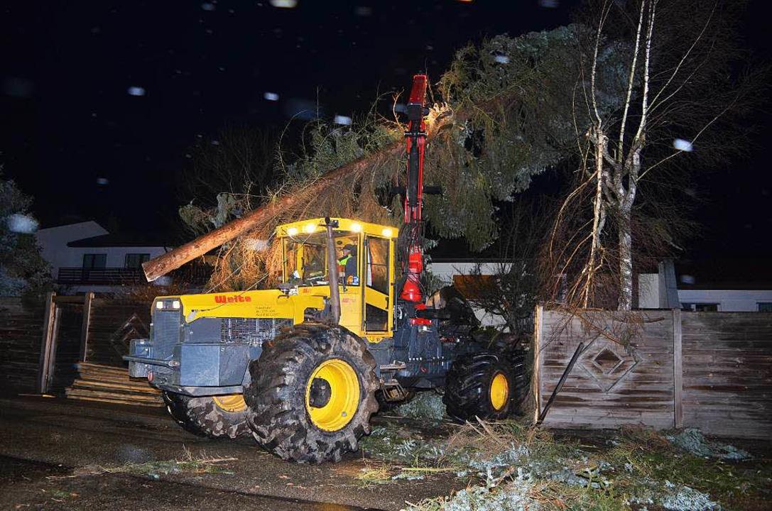 Mit schwerem Gerät wird eine Tanne vom Grundstück geholt.   | Foto: Kamera 24