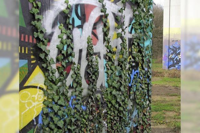 Free Walls: Natur legt sich über Kunst