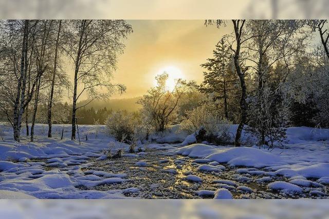 Winterbilder und Skulpturen in der Forstlichen Versuchs- und Forschungsanstalt