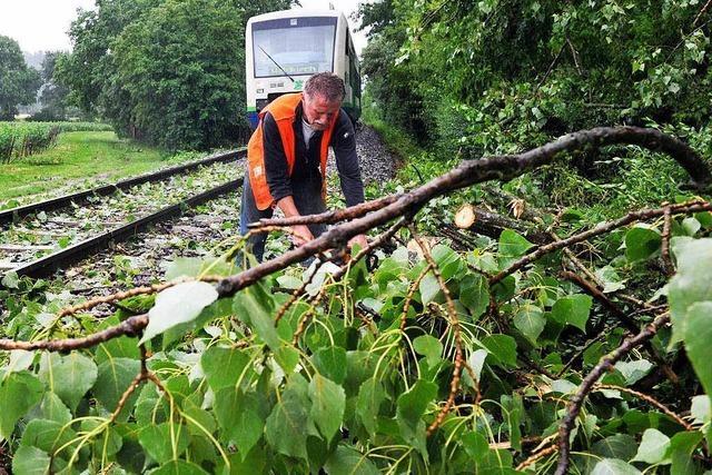 Ersatzverkehr: Umgestürzter Baum bremst Schwarzwaldbahn aus