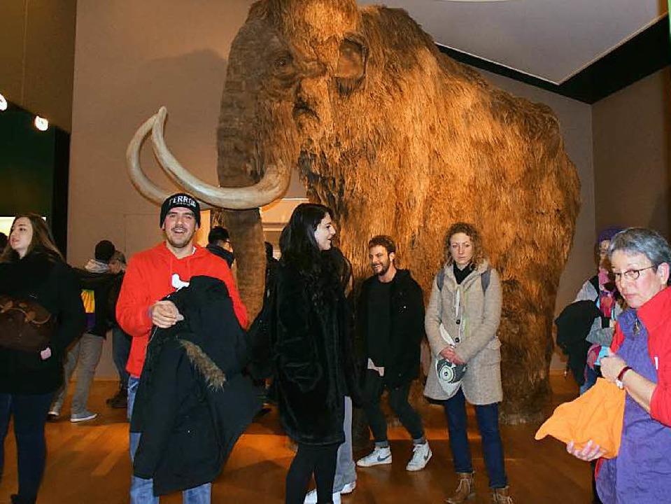 Mamutstoßzähne waren ein Thema im Naturhistorischen Museum.  | Foto: Sarah Nöltner