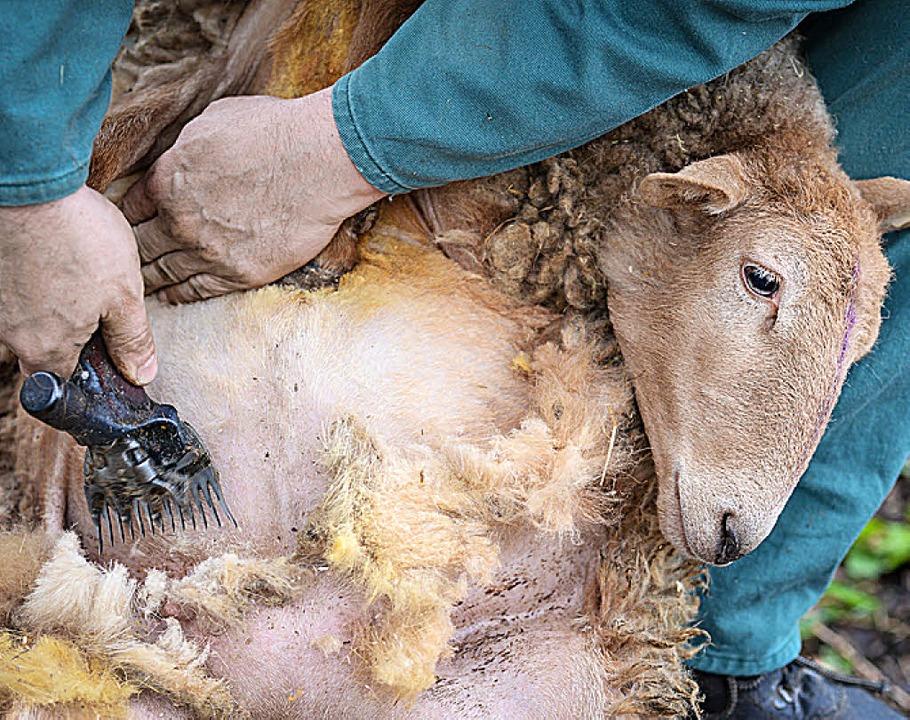 Aus Schafswolle macht Sina Trinkwalder (Mitte) Kleidung wie diesen Mantel.   | Foto: dpa/Privat (2)