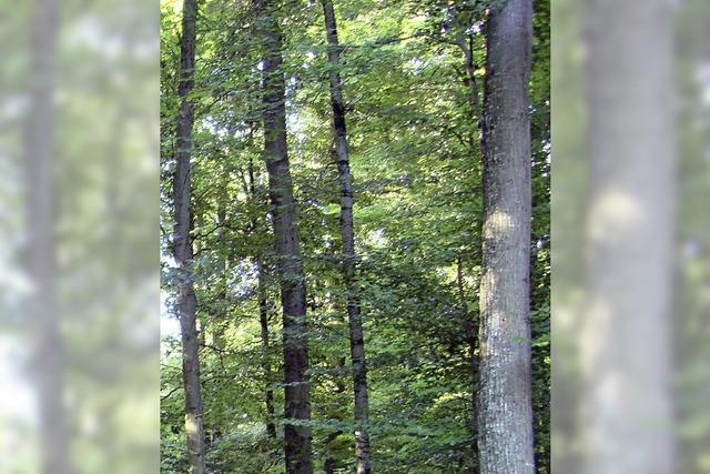 Biotop schädigt Wald
