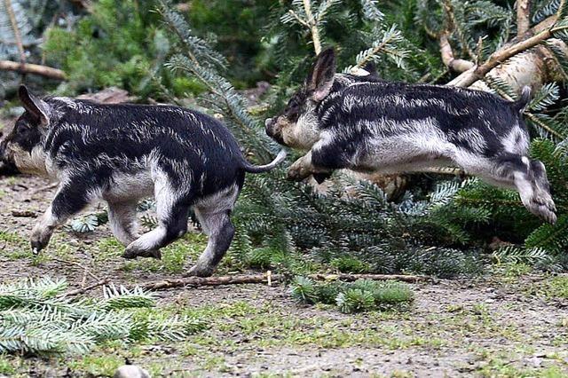 370.000 Besucher und viele, viele Tierbabys - Rekordjahr auf dem Mundenhof
