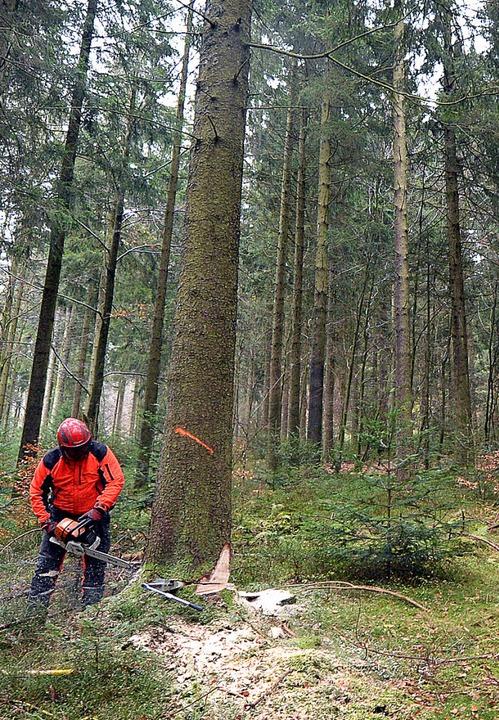 Der Streit um den Wald eskaliert   | Foto: dpa