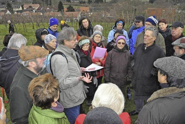 Exkursion auf das Lehener Bergle in Freiburg