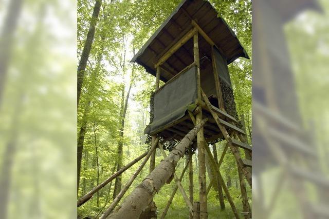 Warum hat der Emmendinger Stadtwald international einen so guten Ruf?