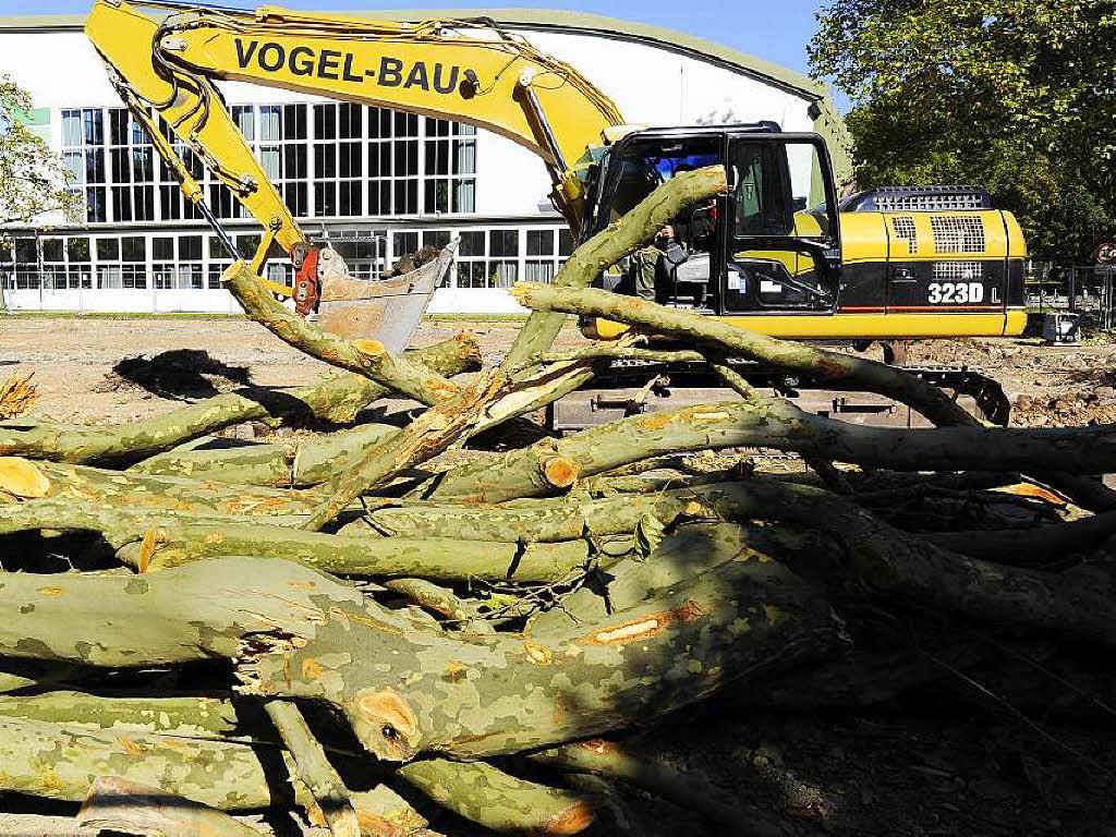 Stadt sperrt Platanenallee wegen maroder Platanen - Badische Zeitung