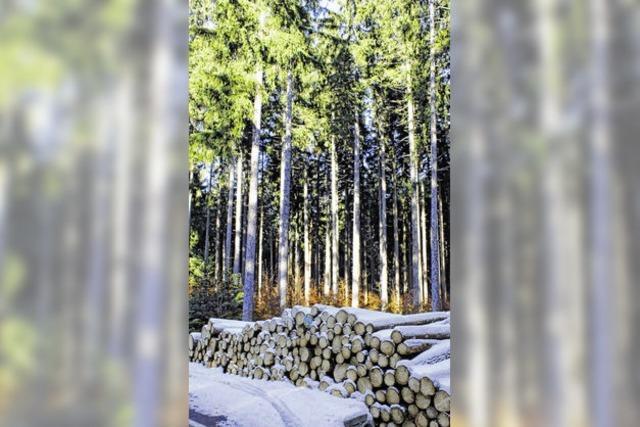 Ist das Land ein Holzmonopolist?