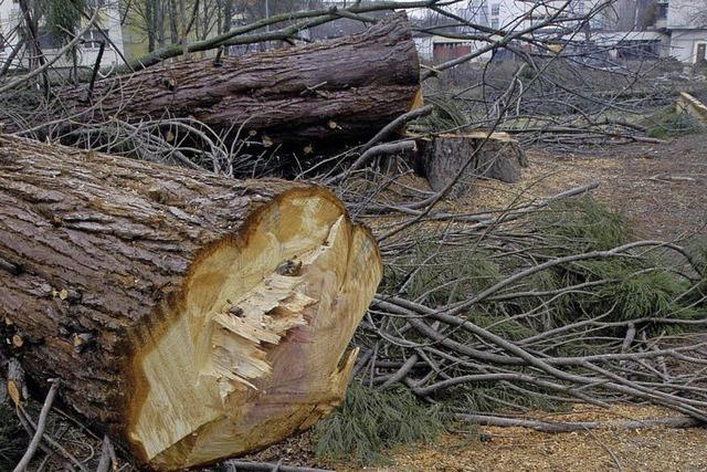 Kein besonderer Schutz für Bäume
