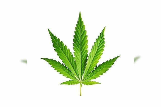Cannabis gibt's bald auf Rezept