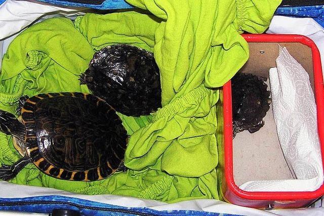 Schildkröte ausgesetzt – verendet
