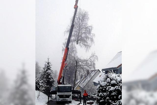 Gemeinde lässt Bäume fällen