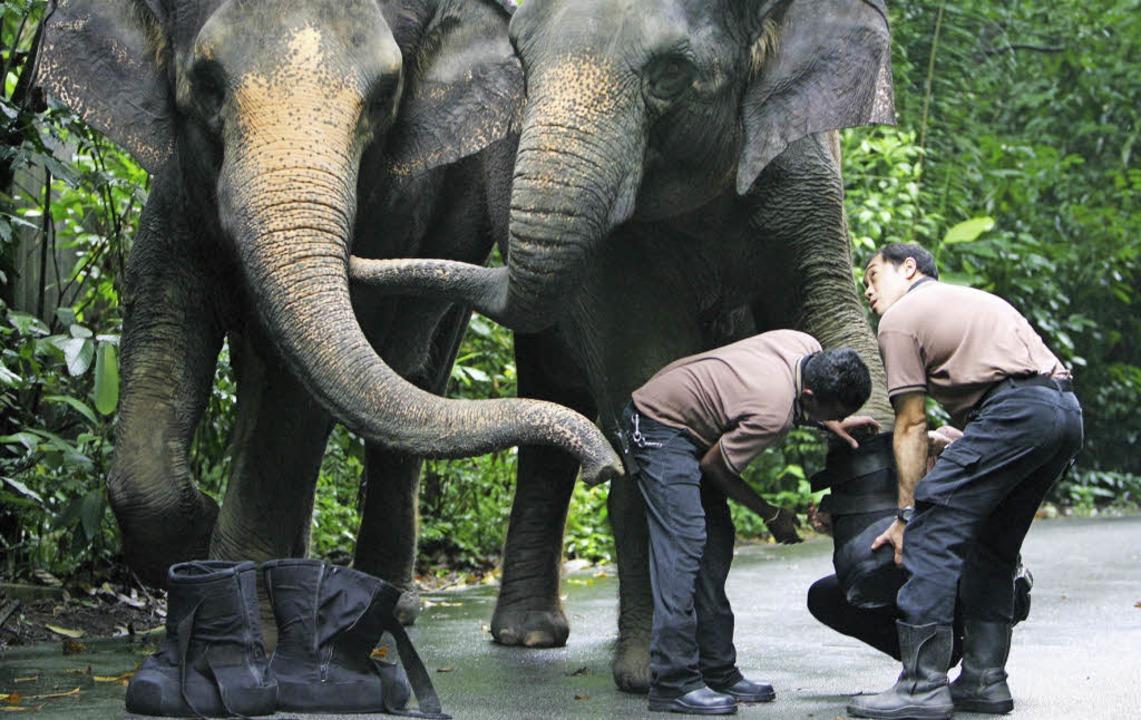 Reisen und helfen lässt sich verbinden,  zum Beispiel im Tierschutz <ppp></ppp>  | Foto: epa How