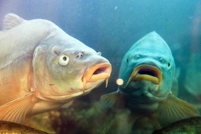 Lahrer Anglerverein erbt rund eine Millionen Euro
