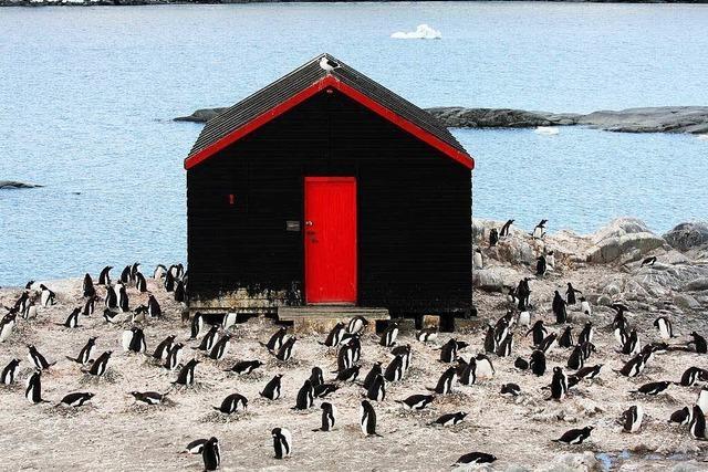 Wie viele Pinguine seht ihr?