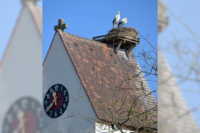 Storchenwacht am Turm
