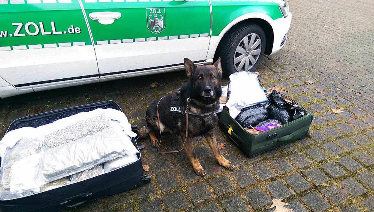 Rauschgiftspürhund Siron hatte die Schmugglerware mit einem Kollegen entdeckt.    Foto: Hauptzollamt Lörrach
