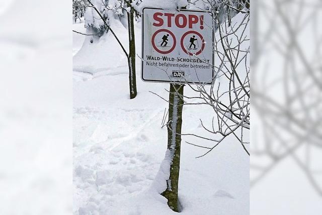 Ruhezonen für Wildtiere sind für Wintersportler tabu
