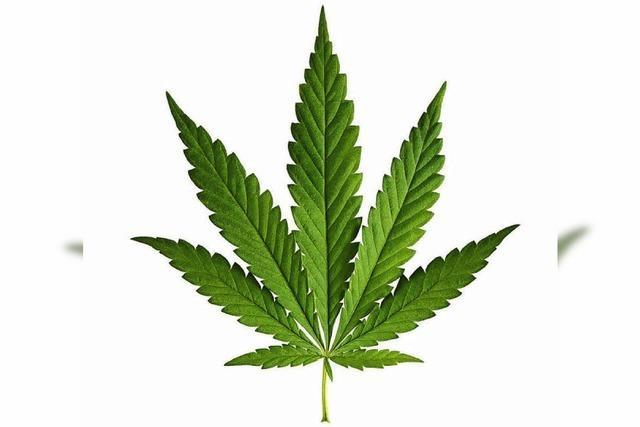 POLIZEINOTIZEN: Marihuana im Fernbus geschmuggelt