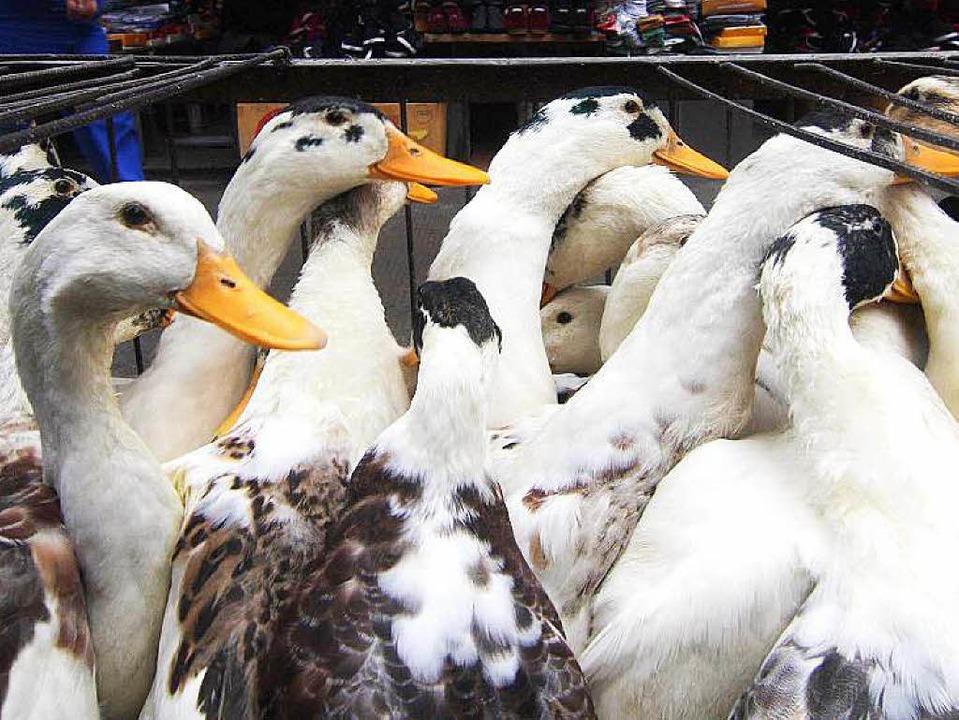 Tiere auf einem Markt  in Zentralchina...rt gelten andere Regeln als in Europa.  | Foto: AFP