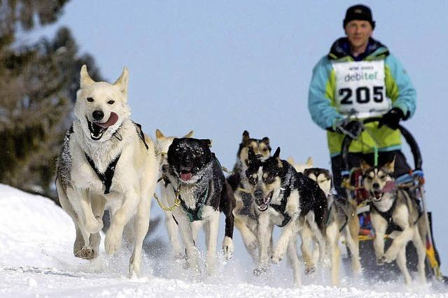 In Bernau findet am Wochenende die Schlittenhunde-Weltmeisterschaft statt